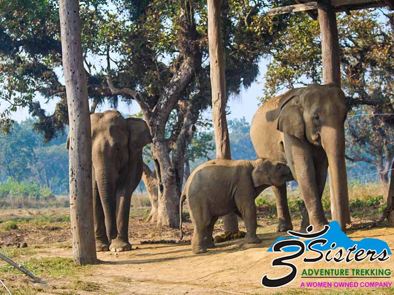 chitwan-jungle-safari