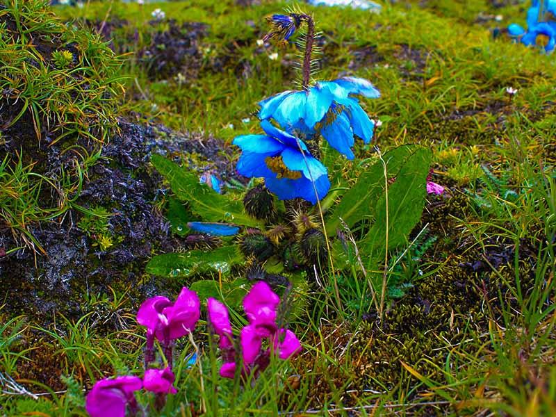 khedum-yumthang-valley-trek-north-sikkim-india