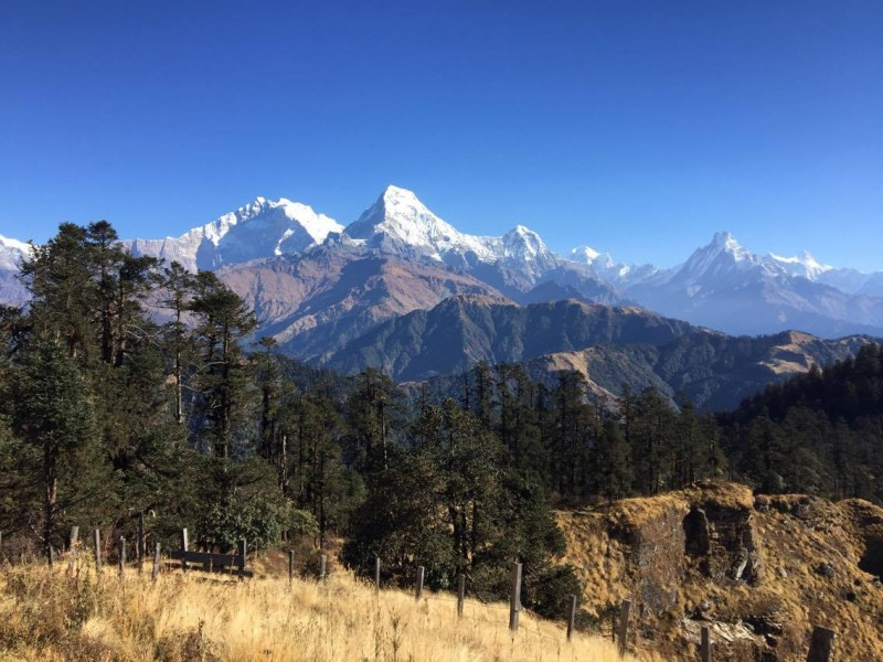 yak-yak-yak-nepal-3sisters-7to12day-trekking-group.jpg